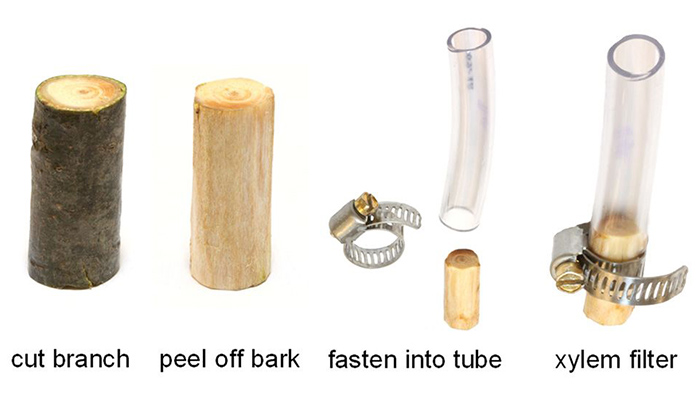 Wood Tubing for filtering water