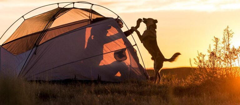 Tips-for-Camping-with-Dogs-Featured-Image