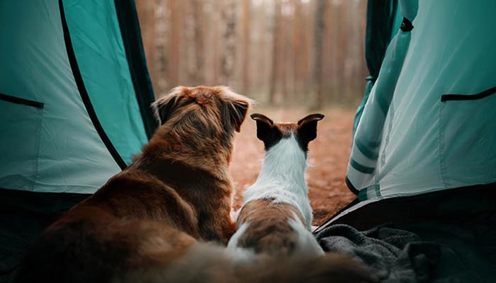 Tips-for-Camping-with-Dogs
