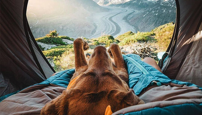 dog-sleeping-in-a-tent