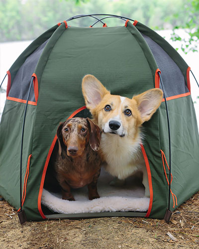 mini-camping-gear-for-dogs